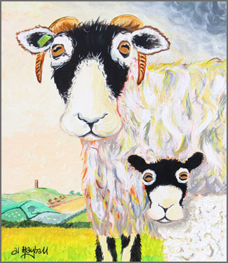 swaledale sheep, swaledale ewe, father and son,