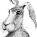harry, hare, hare art,