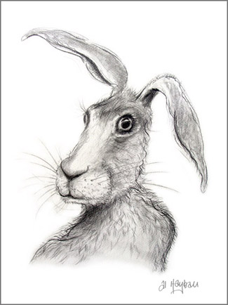 hare illustration, hare portrait,