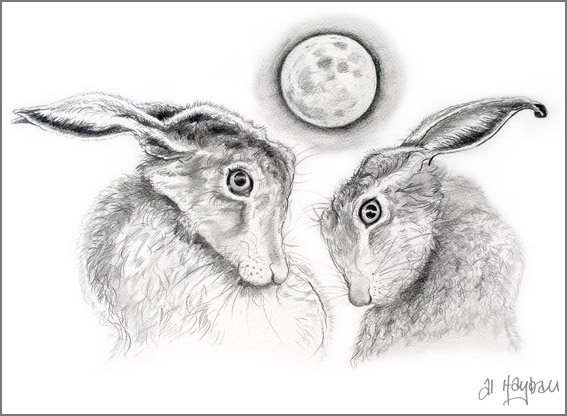 moon bathing hares,