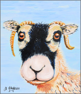 swaledale sheep, swaledale ewe, sheep,